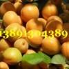 陕西大棚金太阳杏价格,大棚凯特杏产地上市价格