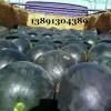 陕西大棚黑无籽西瓜产地批发,大棚黑无籽西瓜产地上市价格