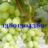 陕西大棚葡萄价格,大棚青提葡萄产地批发价格